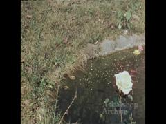 3 women with flower garden; River baptism (out of focus)