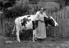 Portrait of older woman with cow