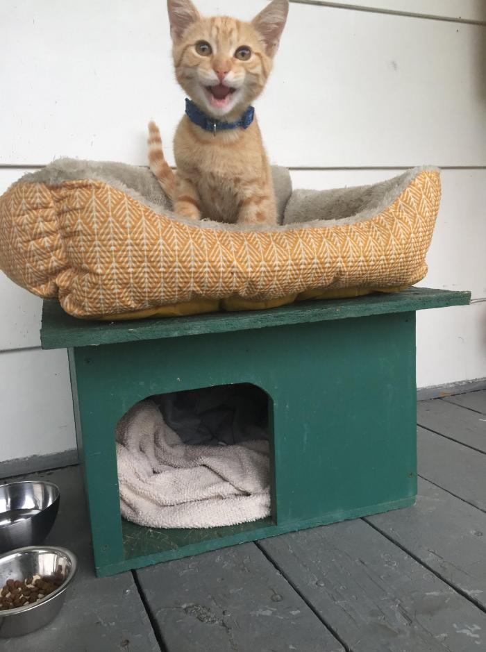 Kitten on a porch