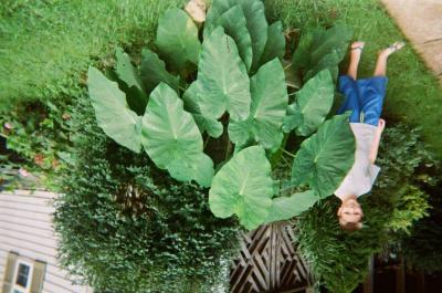 Boy standing beside large leaf plant