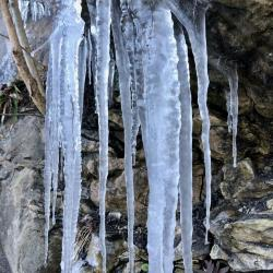 Ice on the Tanglewood Trail