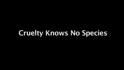 Cruelty Knows No Species (AMI)
