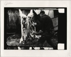 Film still of a butcher cutting a hog - Woodrow Cornett: Letcher Co. Butcher